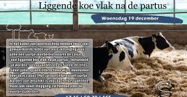 Casuïstiekenuurtje: Liggende koe vlak na de partus